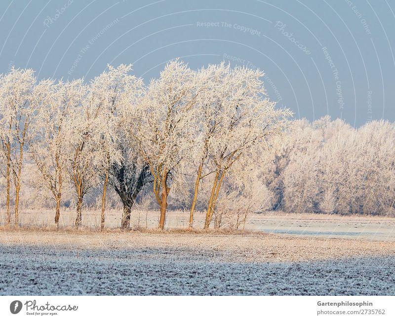 Winterlandschaft in der Lüneburger Heide Umwelt Natur Landschaft Pflanze Wolkenloser Himmel Sonnenlicht Schönes Wetter Eis Frost Baum Eiche Birke Feld