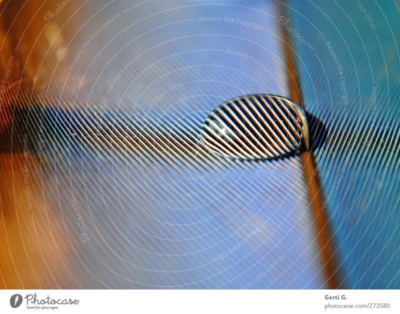 ZebraStreifenPerle Feder Papageienfeder Wassertropfen Zebrastreifen Linie Muster Strukturen & Formen gestreift mehrfarbig türkis blau Tiefenschärfe