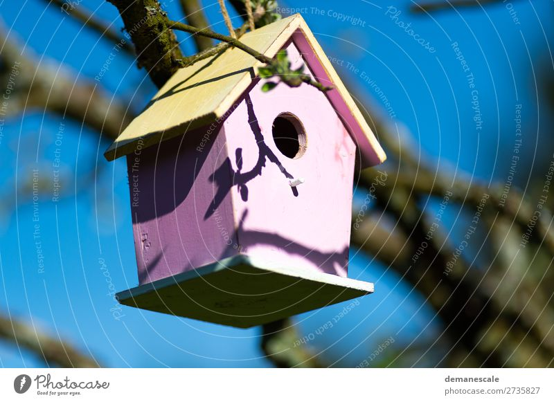 Villa Kunterbunt Natur Landschaft Luft Wetter Baum Vogel Kasten Dekoration & Verzierung Futterhäuschen Holz beobachten entdecken fliegen füttern eckig hell