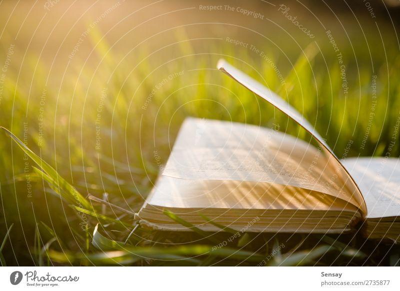 Buch im Freien öffnen Lifestyle Abenteuer Freiheit Sonne wandern Erwachsenenbildung Schule lernen erleben innovativ Inspiration Wissen Farbfoto Morgen