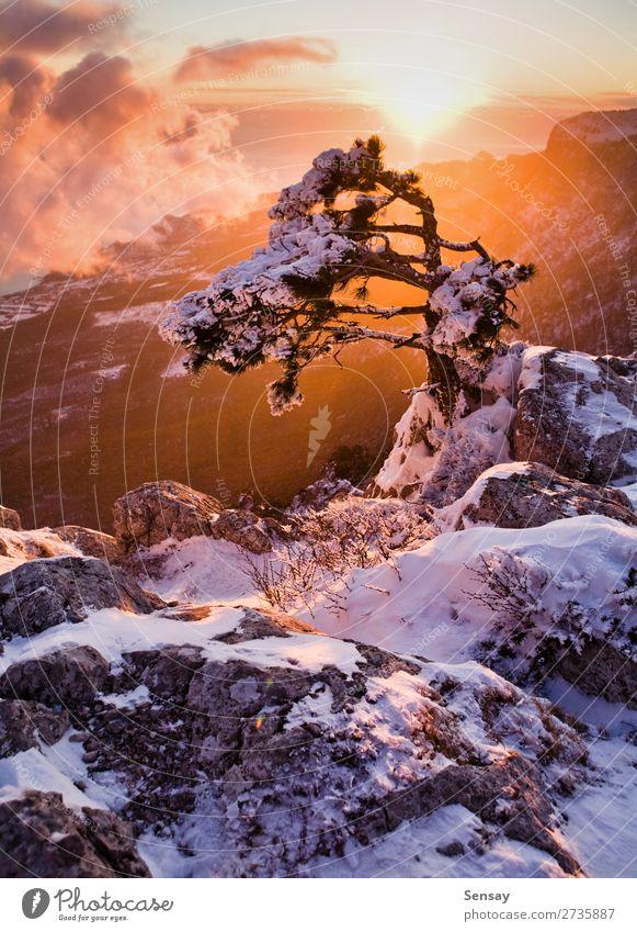 Sonnenuntergang im Hochgebirge schön Ferien & Urlaub & Reisen Winter Schnee Berge u. Gebirge Natur Landschaft Himmel Wolken Klima Wetter Baum Park Wald frisch