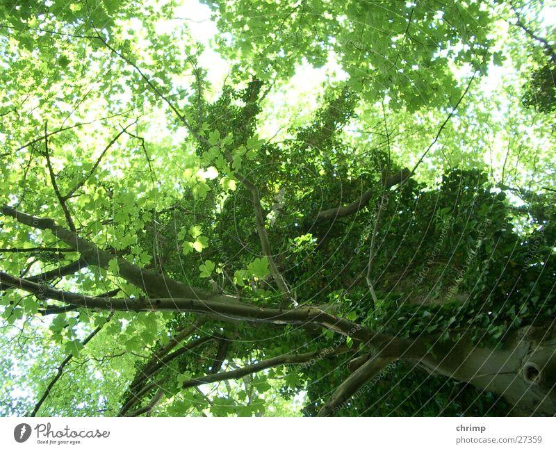 Waldeslust Baum grün Blatt Ast Baumstamm