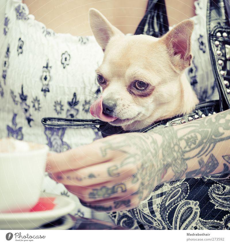 cappuccinosüchtig Hund Mensch Jugendliche Hand Tier Erwachsene feminin Leben Junge Frau 18-30 Jahre Getränk Kaffee trinken Neugier Tattoo Café