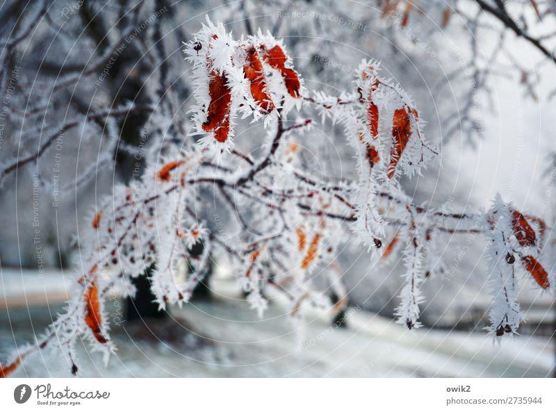 Kristalle am Baum Umwelt Natur Landschaft Pflanze Winter Schönes Wetter Eis Frost Schnee Zweig frieren kalt stachelig bizarr filigran zerbrechlich Raureif