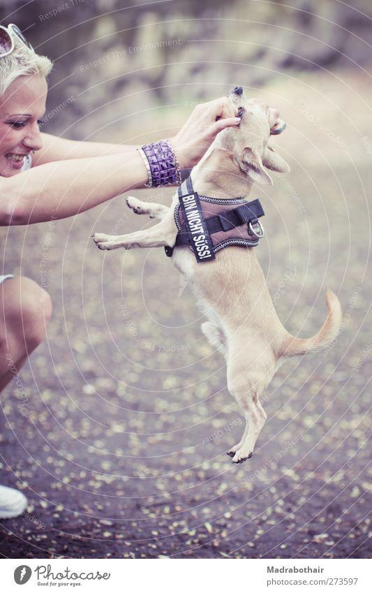 bin nicht süss Mensch feminin Junge Frau Jugendliche Erwachsene 1 Armreif Nasenring blond Haustier Hund Chihuahua Tier Sonnenbrille Brustgurt Spielen trendy