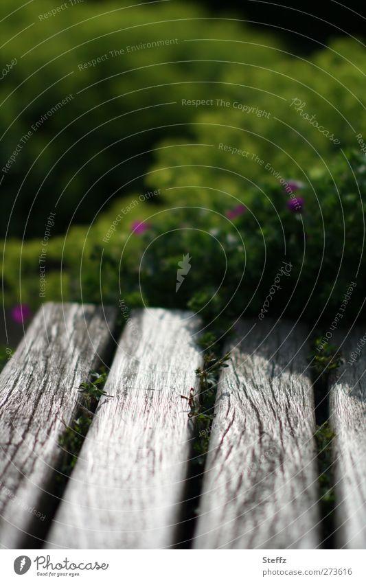 einen Moment verweilen Sonnenlicht Sommer Pflanze Sträucher Garten Park Bank Sitzgelegenheit Holzbank Holzbrett grau achtsam Wachsamkeit Gelassenheit ruhig