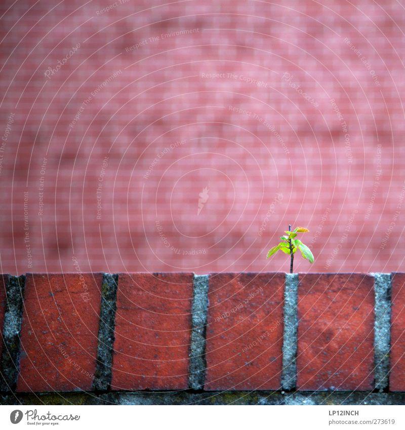 rED Umwelt Natur Tier Sommer Pflanze Baum Park Mauer Wand Backstein niedlich rot Willensstärke anstrengen Kraft Wachstum Farbfoto Außenaufnahme Menschenleer