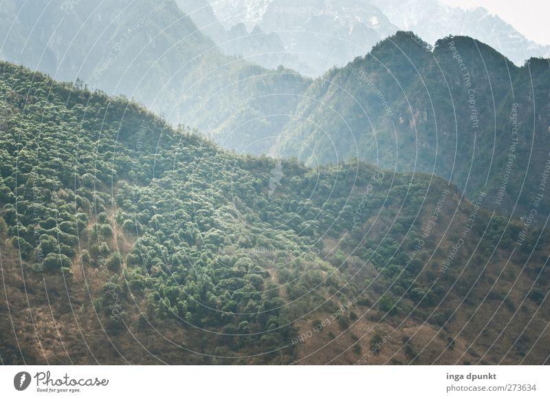 die grünen Berge von Meishan Umwelt Natur Landschaft Urelemente Frühling Schönes Wetter Nebel Pflanze Baum Wald Hügel Berge u. Gebirge China Sichuan