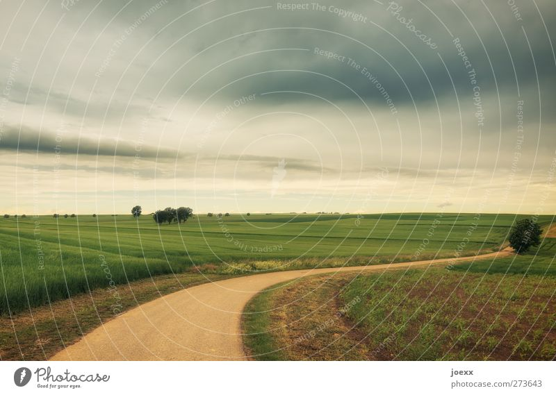 Geradeaus ist selten Natur Landschaft Himmel Wolken Horizont Sommer Schönes Wetter Nutzpflanze Feld Straße Wege & Pfade braun grau grün ruhig Idylle ländlich