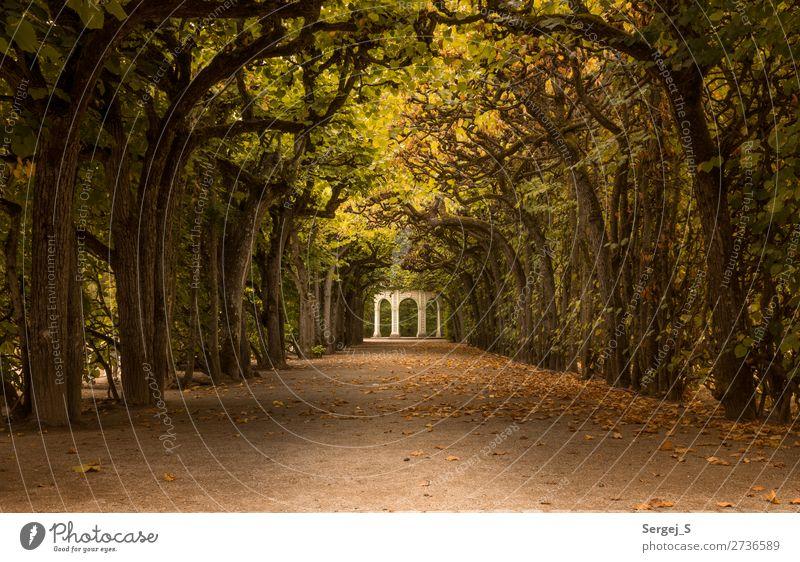 Pavillon Natur alt Sommer schön Baum Erholung Einsamkeit ruhig Herbst gelb Umwelt Wege & Pfade Deutschland orange Park gold