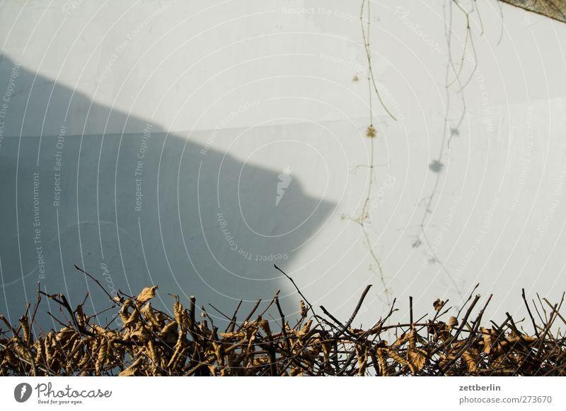 Hecke Umwelt Natur Herbst Nutzpflanze Stadt Bauwerk Gebäude Mauer Wand Fassade gut Ranke Garten Schattenspiel Farbfoto Gedeckte Farben Außenaufnahme