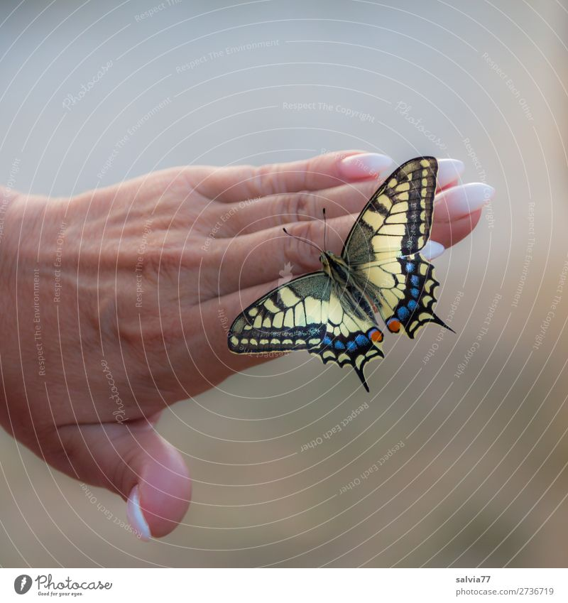 Leichtigkeit schön Hand Tier feminin Glück ästhetisch Finger Flügel Insekt Körperpflege Schmetterling achtsam Tierliebe Nagellack Maniküre