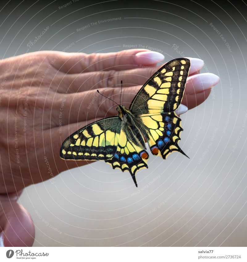 Fingerspitzengefühl   perfekte Maniküre Natur Sommer schön Hand Tier Umwelt ästhetisch berühren Vertrauen Schmetterling Fingernagel Tierliebe Schwalbenschwanz