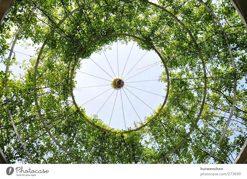 rund und rund und rund und rund Umwelt Natur Pflanze Luft Himmel Sonne Sommer Schönes Wetter Baum Blatt Park atmen beobachten Denken genießen Blick träumen