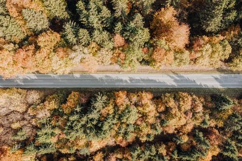 Waldweg im Herbst von oben herbst drohne luftaufnahme bäume baum straße