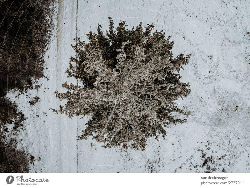 Tannenbaum von oben Baum fichte winter schnee bäume wald heide Luftaufnahmen drone luft