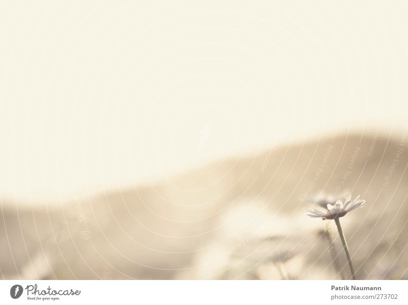 Gold Himmel Natur schön Pflanze Sommer Tier Erholung Umwelt Landschaft Wärme Gefühle Blüte Wetter Feld glänzend Wachstum