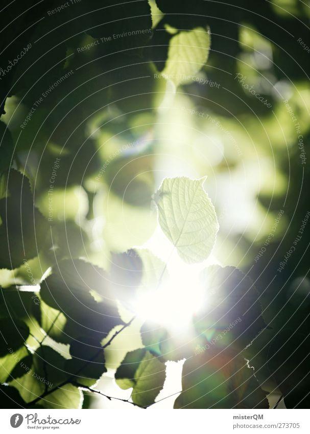 Segen. Kunst Umwelt Natur Landschaft Urelemente ästhetisch Zufriedenheit Blatt Blätterdach blätternd grün Grünpflanze Waldlichtung Licht Lichtspiel Lichtschein