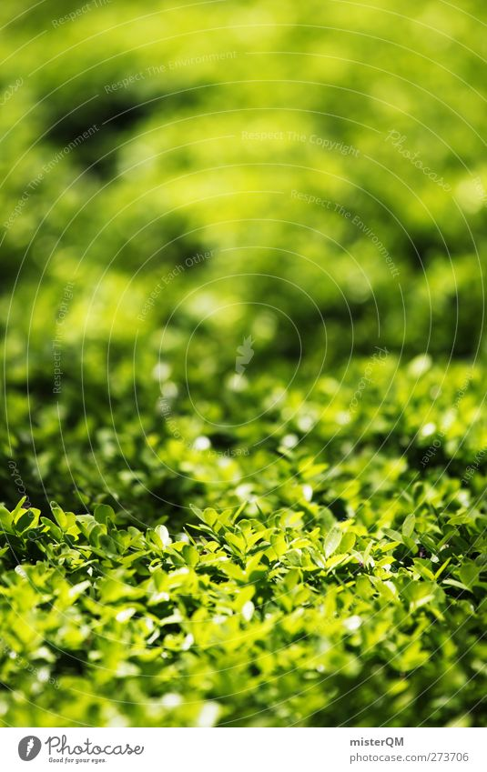 Heckansicht. Umwelt Natur Landschaft ästhetisch Gartenbau grün Grünfläche Hecke Wachstum Naturliebe Naturwuchs Gartenarbeit Labyrinth Farbfoto Gedeckte Farben