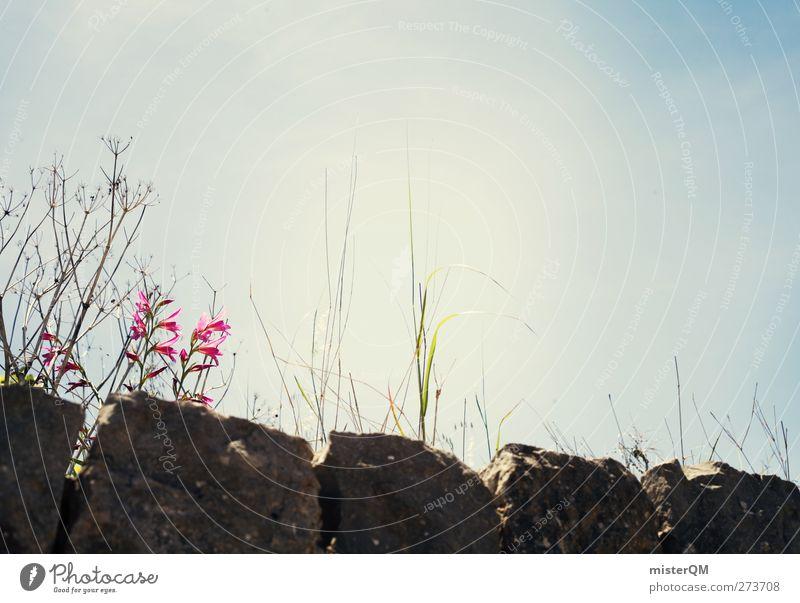 Auf der Mauer. Umwelt Natur ästhetisch Stein Himmel (Jenseits) Wegrand mediterran blau Wetter Farbfoto Gedeckte Farben Außenaufnahme Nahaufnahme Detailaufnahme