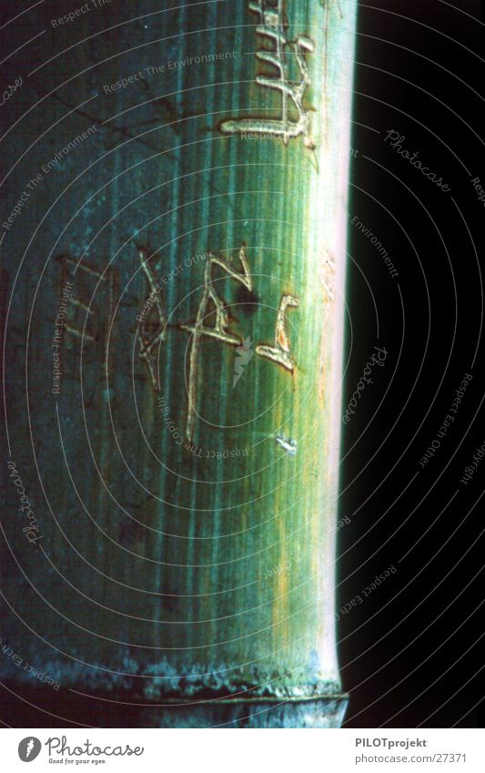 Bambus mit Inschrift Pflanze ruhig Zufriedenheit Zeit Wachstum Schriftzeichen Zeichen Bambusrohr Daoismus Reifezeit Yin und Yang Kontinuität