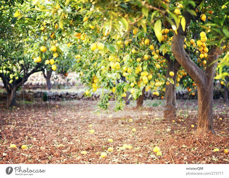 Orange Garden VI Kunst ästhetisch Zitrone Zitronensaft zitronengelb Zitronenbaum Zitronenblatt Baum Plantage Mallorca reif Vitamin C Farbfoto Gedeckte Farben