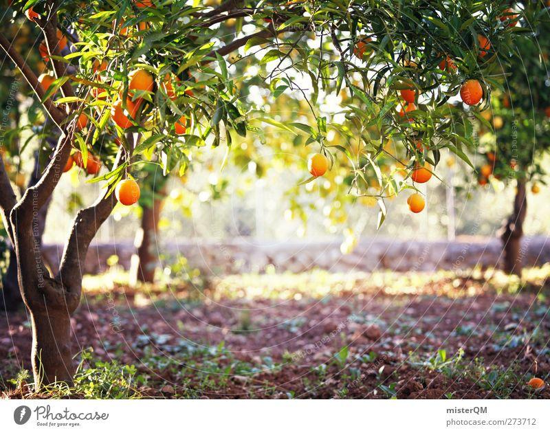 Orange Garden VII Kunst orange Idylle ästhetisch fantastisch Spanien Mallorca reif Obstbaum Plantage Urlaubsstimmung Baum Frucht Kultur Nahaufnahme