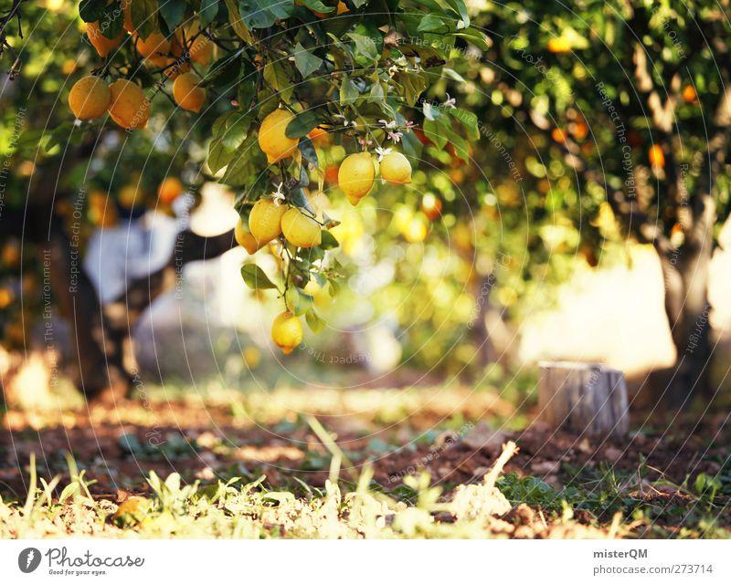 Orange Garden VIII Natur Kunst Idylle ästhetisch fantastisch Bioprodukte ökologisch Zitrone sauer ursprünglich Plantage Landwirtschaft Sonnenstrahlen Lebensmittel abstrakt Baum