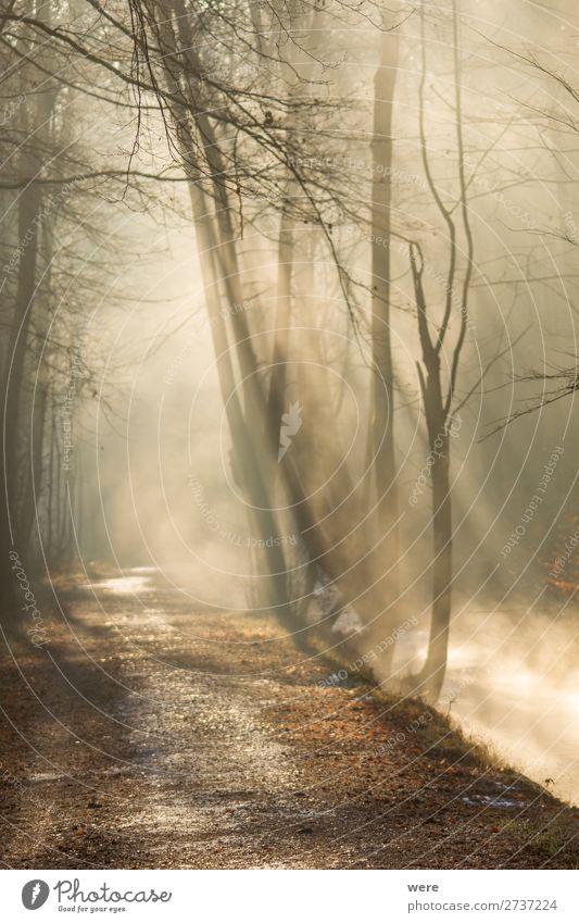 Fog rises on a sunny winter morning Winter Natur Sonne Sonnenaufgang Sonnenuntergang Sonnenlicht Wetter Schönes Wetter Nebel Bach Fluss Wärme copy space creek