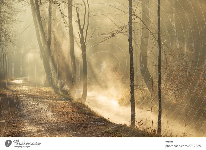 Fog rises from a creek Winter Natur Sonnenaufgang Sonnenuntergang Sonnenlicht Flussufer Bach glänzend Wärme copy space dirt fog forest path forest road