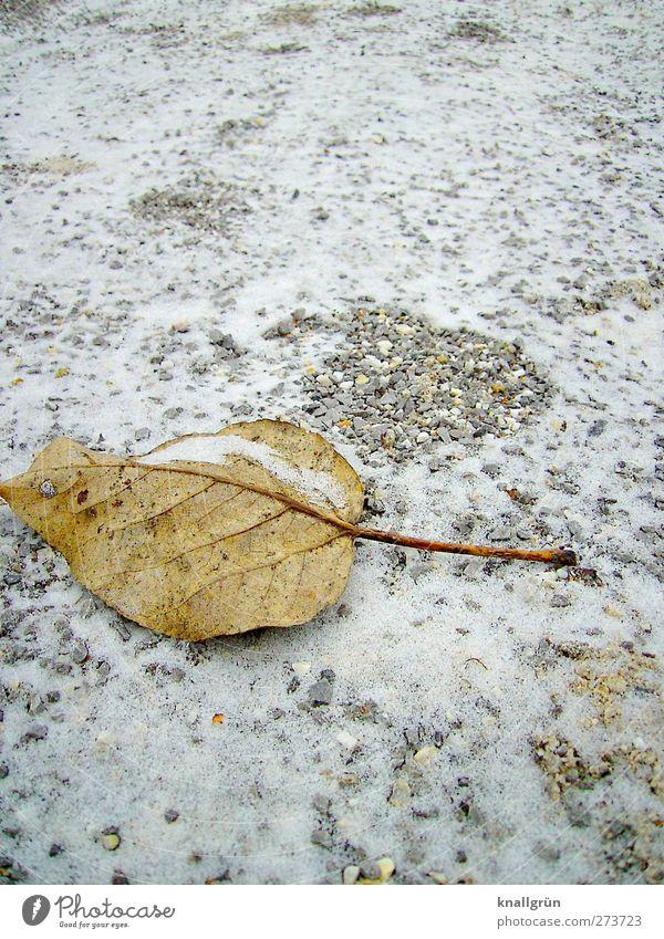 Spuren Natur weiß Pflanze Einsamkeit Blatt Winter ruhig Umwelt kalt Schnee Gefühle grau braun Eis Stimmung Erde