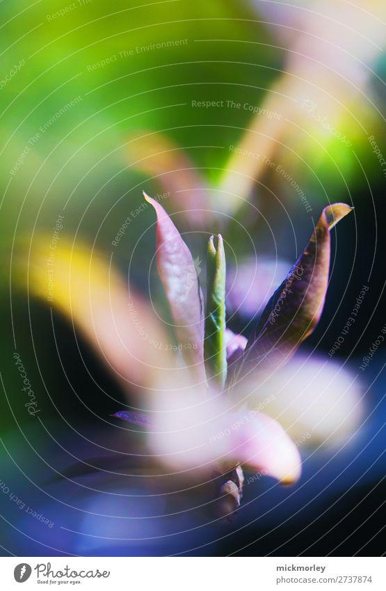 Frühlingserwachen schön Ausflug Umwelt Natur Sommer Schönes Wetter Pflanze Blüte Garten Park Wiese beobachten Blühend genießen träumen Wachstum Duft exotisch