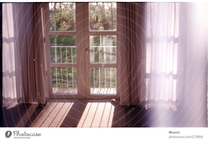 Guten Morgen weiß grün schön ruhig Fenster Wärme Frühling Glück Garten Innenarchitektur rosa Dekoration & Verzierung positiv Fensterscheibe Gardine Fensterblick