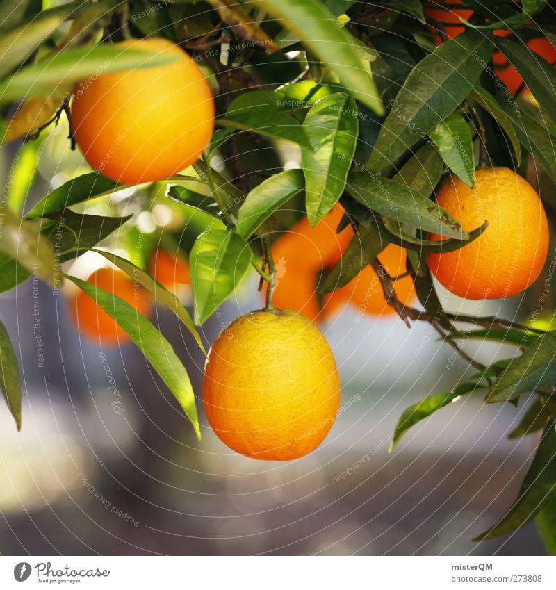 Orange Garden X Lebensmittel Frucht Ernährung Bioprodukte Vegetarische Ernährung Umwelt Natur ästhetisch Orangenbaum Wachstum hängen reif Vitamin C Gesundheit