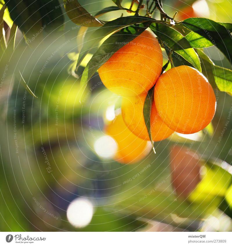 Orange Garden XI Natur Umwelt Gesundheit Frucht orange Orange ästhetisch Klima Schönes Wetter Bioprodukte hängen reif ökologisch Klimawandel Saft Plantage