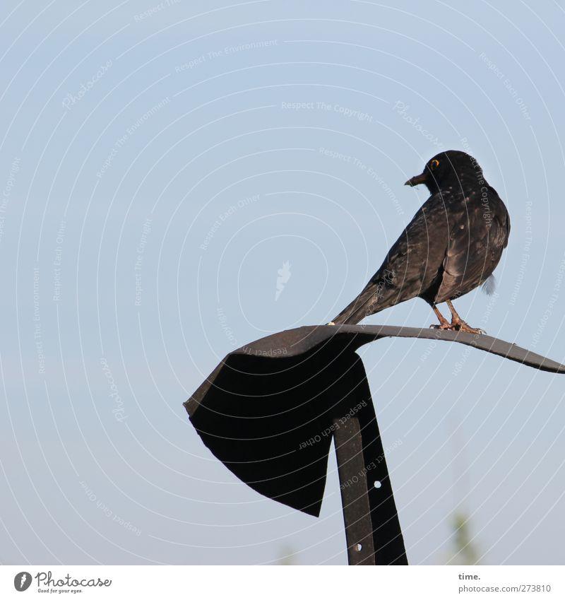 Zauselamsel Tier Einsamkeit Metall Vogel Wildtier sitzen stehen Flügel Pause beobachten Wachsamkeit hocken gefiedert Amsel