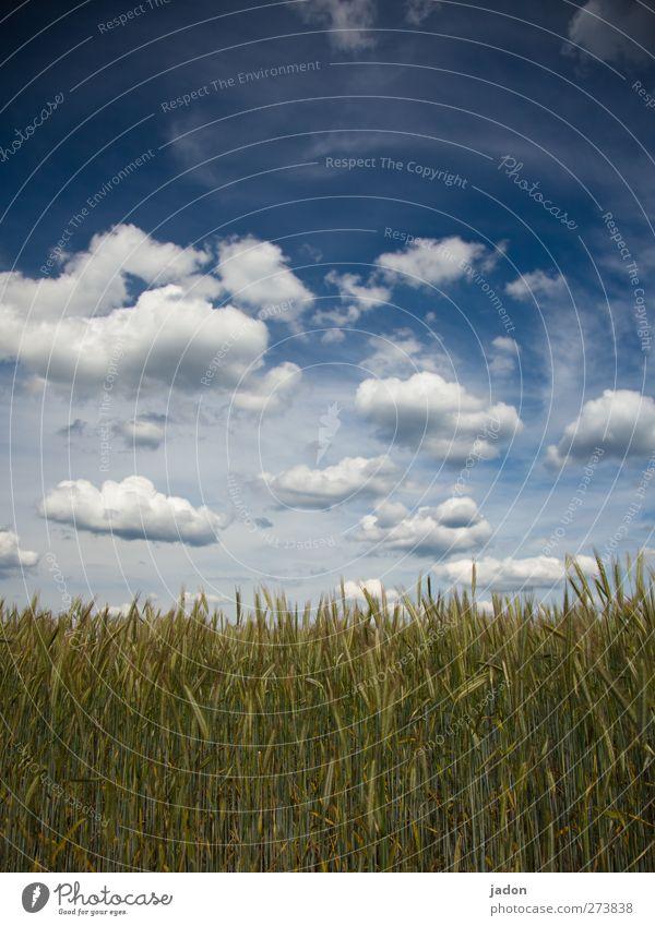 wolkig. harmonisch Erholung Umwelt Natur Landschaft Himmel Wolken Frühling Schönes Wetter Pflanze Nutzpflanze Getreide Getreidefeld Feld Unendlichkeit blau grün
