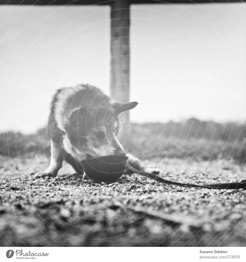 Hiddensee | wolken. Hund alt Traurigkeit sitzen Hilfsbereitschaft Pause trinken Müdigkeit Haustier Picknick Erschöpfung Hundeleine Fressnapf Lieblingsplatz