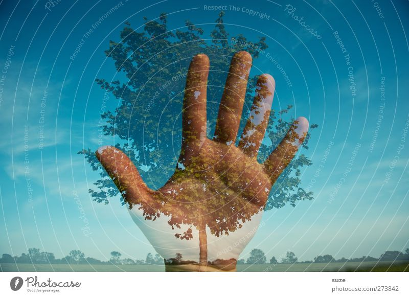Save the nature Himmel Natur blau Hand Pflanze Baum Landschaft Umwelt Horizont Klima Wachstum Zukunft Finger Urelemente Schönes Wetter Wandel & Veränderung