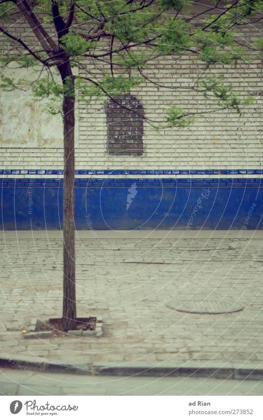 lebensraum Stadt Baum Haus dunkel Straße Wand Wege & Pfade Mauer Gebäude Park dreckig Bauwerk Bürgersteig Lebensraum eingeengt eingeschlossen