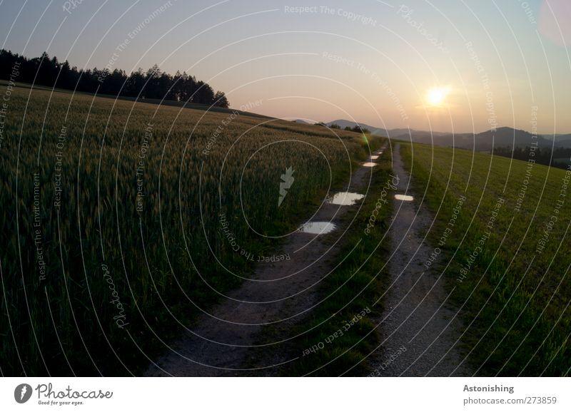 Weg Umwelt Natur Landschaft Pflanze Erde Sand Wasser Himmel Wolkenloser Himmel Horizont Sonne Sonnenaufgang Sonnenuntergang Sommer Wetter Schönes Wetter Wärme