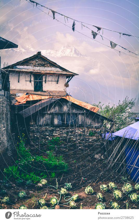 Bauernhäuschen in Ghandruk mit Annapurna im Hintergrund Berge Hochgebirge Sonnenlicht Gebirge asien Nepal Himalaya Gipfel Hütte Bergbauer Beet selbstversorgung
