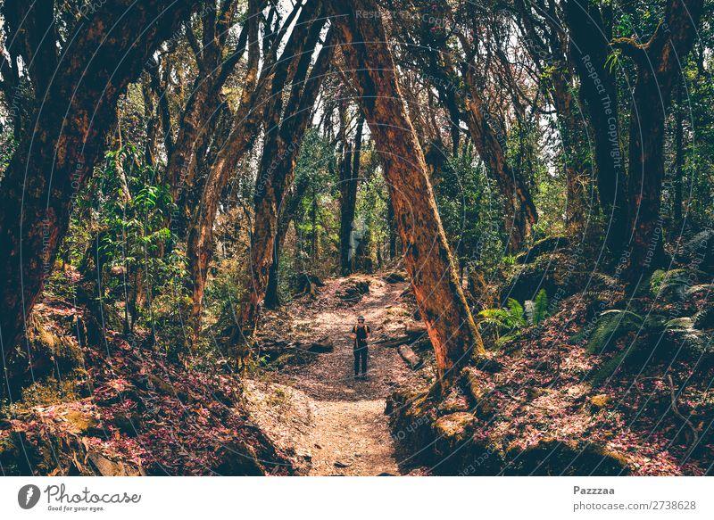 Drohender Rhododendron Gesundheit Ausflug Abenteuer Expedition Berge u. Gebirge wandern Mensch 1 Umwelt Natur Landschaft Pflanze Wald Urwald Wege & Pfade gehen