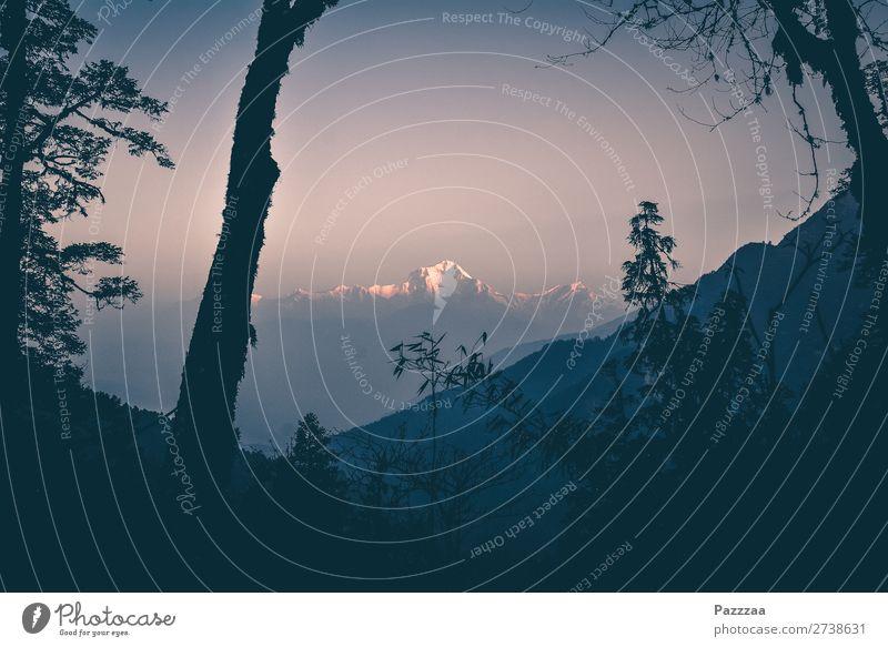 Dhaulagiri Natur Landschaft Wald Berge u. Gebirge wandern Aussicht Gipfel Schneebedeckte Gipfel Nepal Himalaya