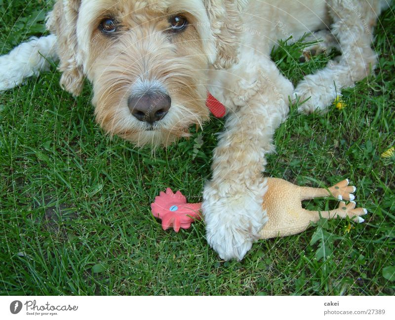 """Meins!"" Sommer Spielen Hund Freundschaft Jagd Dieb Verhalten Feindschaft Futterneid"
