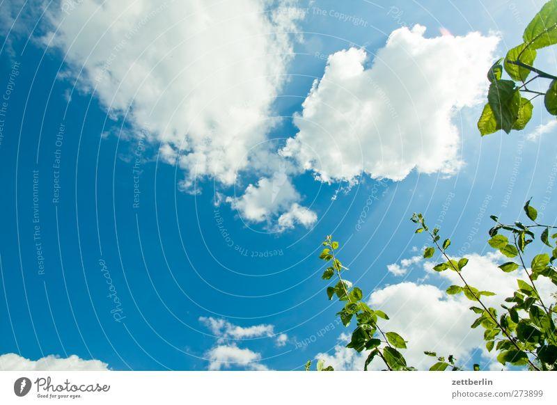 Pflaumenbaum Sommer Garten Umwelt Natur Landschaft Pflanze Himmel Wolken Klima Klimawandel Wetter Schönes Wetter Blatt Blüte Park Wachstum Schrebergarten