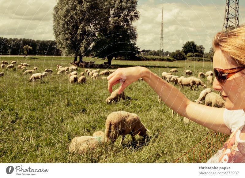 Das Greifen der Lämmer II Mensch Jugendliche Hand Freude Tier feminin Junge Frau lustig Finger Perspektive festhalten Landwirtschaft fangen Fressen