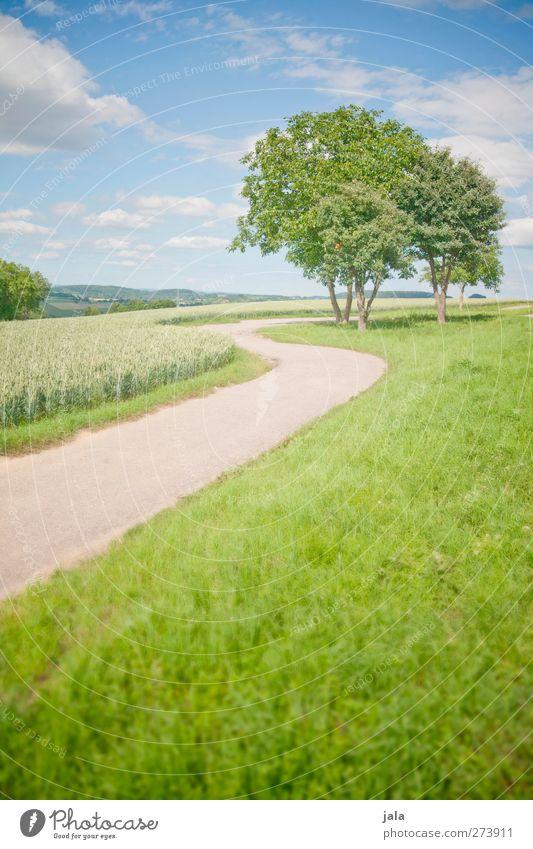 tage wie dieser. Umwelt Natur Landschaft Pflanze Himmel Wolkenloser Himmel Sommer Schönes Wetter Baum Gras Grünpflanze Wiese Feld natürlich blau grün