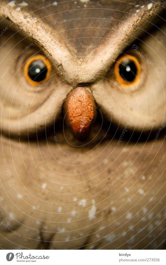 Schau mir in die Augen Kleines schön Tier lustig glänzend ästhetisch Kitsch Konzentration Skulptur intensiv listig Eulenvögel durchdringend Eulenaugen