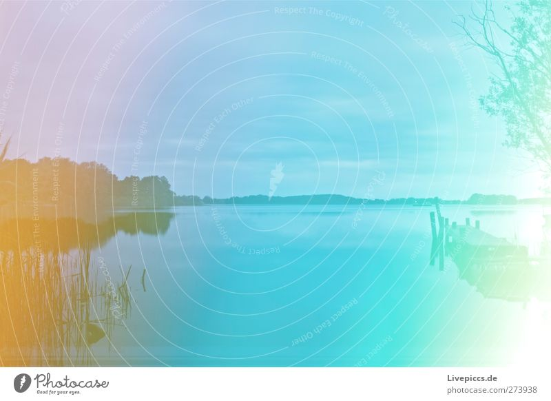 Farben der Müritz Himmel Natur blau Wasser grün Baum Sommer Pflanze Strand Wolken Umwelt Landschaft gelb Gras Küste See